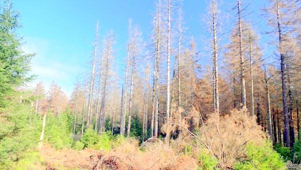 болна гора